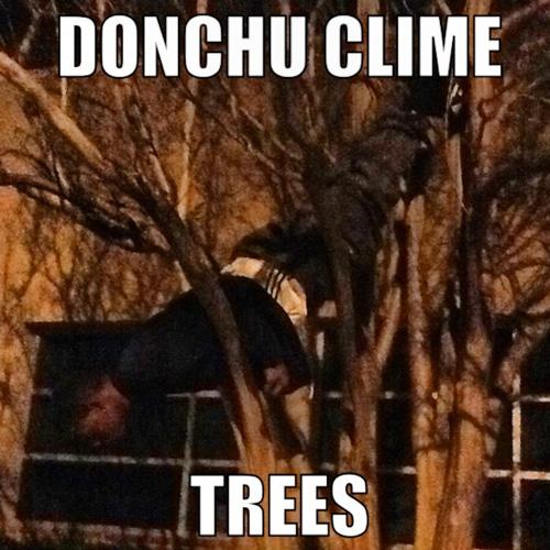 TreePlank